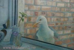 Seagull at window